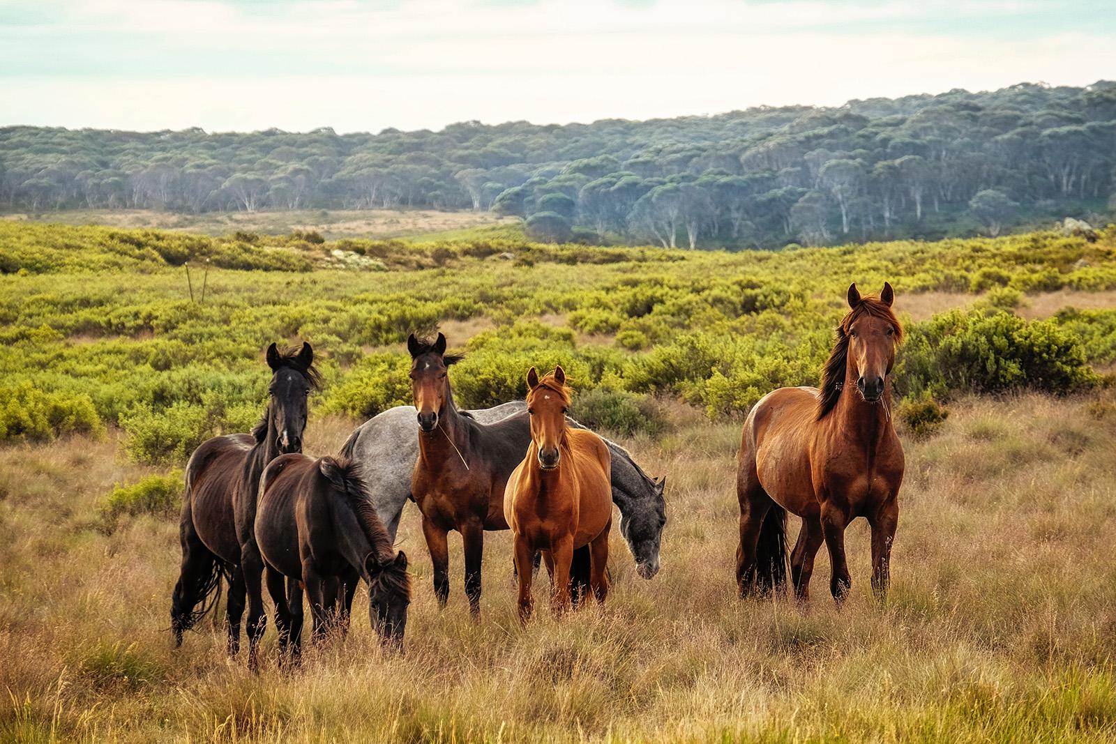 Équicoaching : quels sont les points communs entre les chevaux et les organisations libérées ?